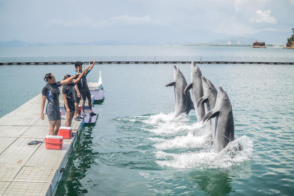 Sentinels of the Sea - Ocean Adventure, Subic Bay
